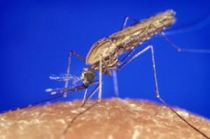20070710-moustique